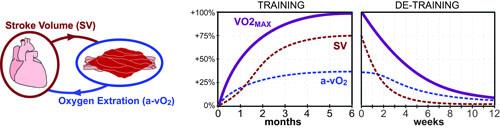 FIG1-VO2max-adapt-v1