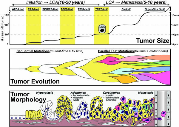 tumorigenesis