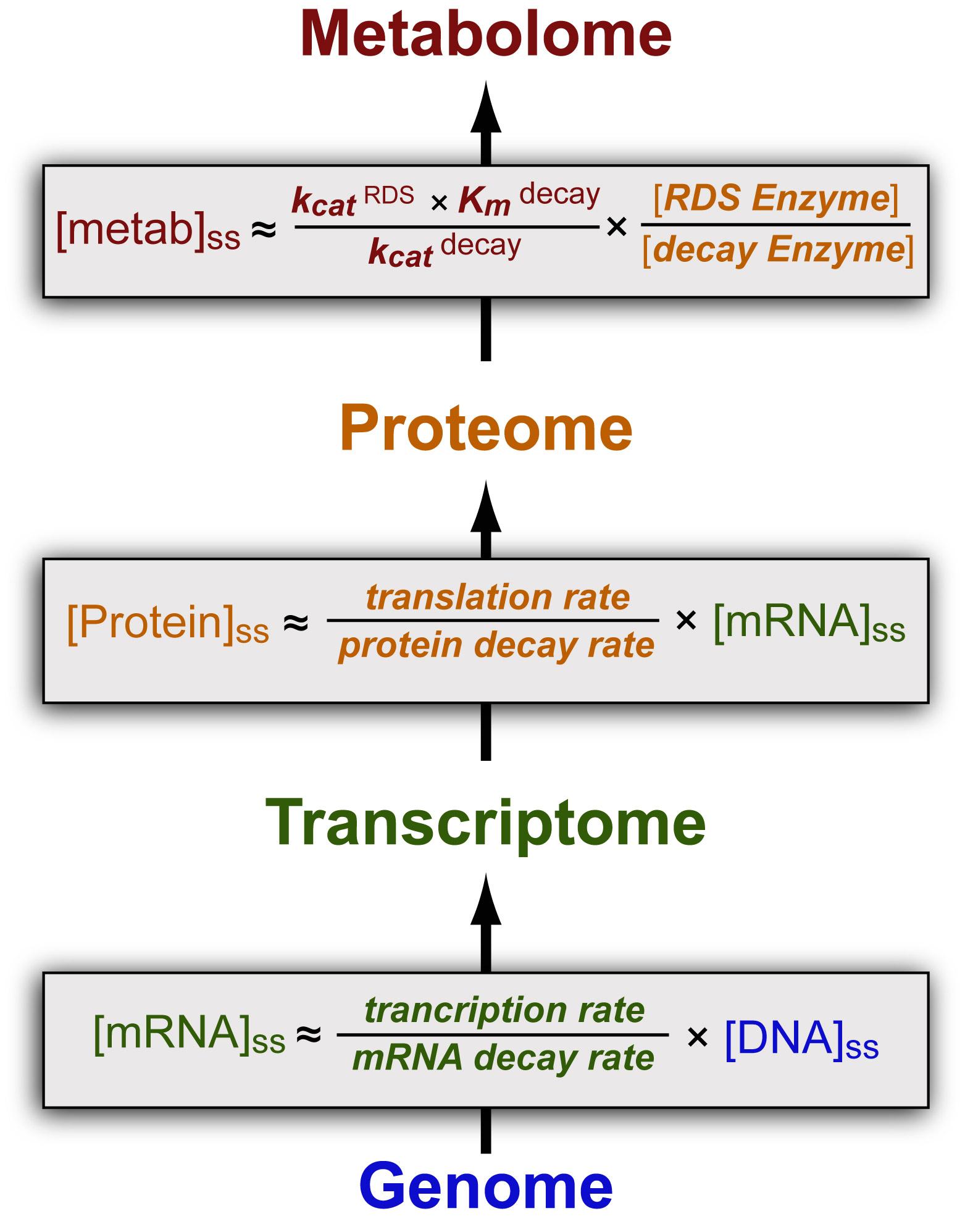 FIG1-genome-proteome-metabolome-v8