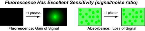 10 Fluorescence Sensitivity