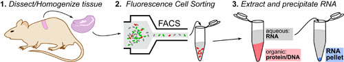 rt-pcr-gene-expression-intro-v7