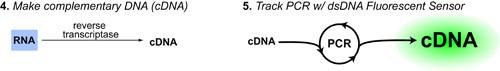 rt-pcr-gene-expression-intro-v7